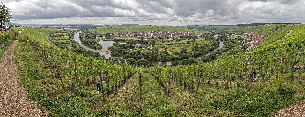 Weininsel Sommerrach